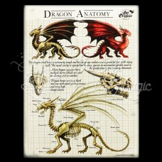 Dragon Anatomy Canvas