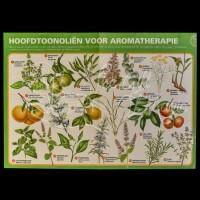 Aromatherapie Hoofdtoonoliën Centerfold Poster
