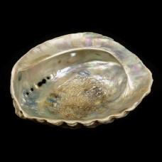 Abalone Schelp Groot