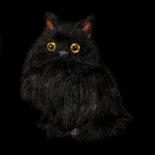 Fluffy Zwart Katje