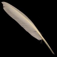 Witte Ganzenveer
