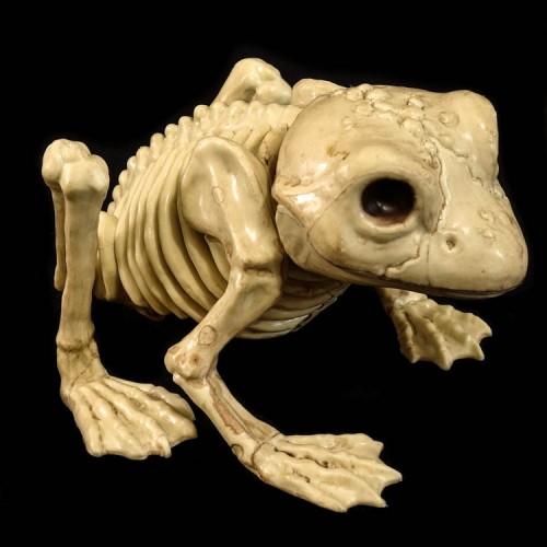 Plastic Kikker Skelet