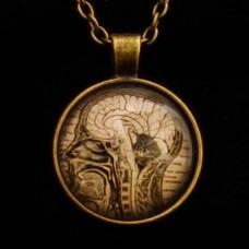 Hanger Hersenen Anatomie Cobochon